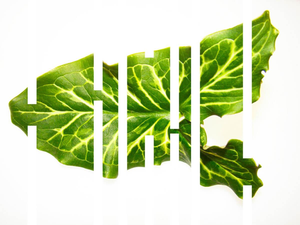 arum_Herbarium-series-by-Rachela-Abbaet